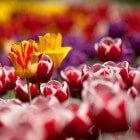 Borderplanten op Kleur / Hoogte - Oranje Rode & Roze Planten