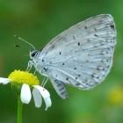 Een tuin vol vlinders? Tips om ze te lokken