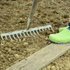 Tuinieren: Goed voor de mentale en fysieke gezondheid