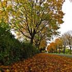 De najaarstuin: snoeien en najaarsplanten