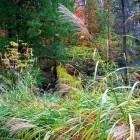 Siergrassen zijn gemakkelijk te combineren met vaste planten