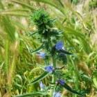 Met deze planten maakt u (bedreigde) bijen écht blij!