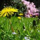 De onderhoudsvrije tuin