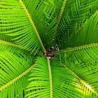 De Palm, koningin in het plantenrijk