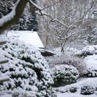 Tuin winterklaar maken: nodig of niet?