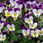 Planten voor op het winterterras