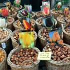 Etagebeplanting; bloembollen in pot