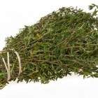 Tijm (Thymus vulgaris)