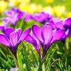 Voorjaarsschoonmaak en lenteklusjes in de tuin