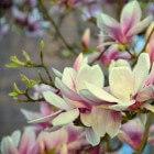 Voorjaarsbloeiende bomen