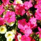 Easyplant en zelf jonge tuinplanten verder opkweken