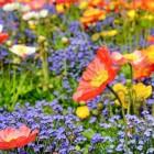 Natuurtuin met een verhaal: een bloemweide