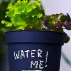 Tuinleven: mooie planten in mooie potten