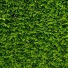 Tuin: ideeen oude omheining tuin of balkon