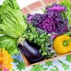 De groententuin: het zaaien