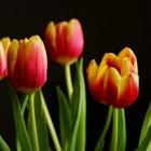 Bloembollen en knollen planten