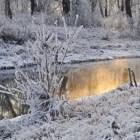 Help uw vijver de winter door