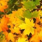 Gevallen blad; wegharken, laten liggen of compost van maken?