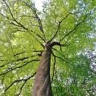 Volwassen of volgroeide bomen en struiken kopen