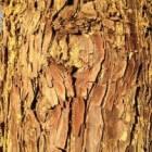 Bomen met opvallende stam, bladeren, vruchten of herfstkleur