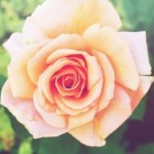 Hoe creëer je een romantische sfeer in de tuin?
