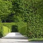 Het creëren van privacy in de tuin