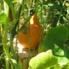De eetbare tuin: voor sier en oogst
