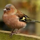 Maak uw tuin vogelvriendelijk