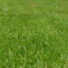 Wanneer graszaad zaaien?