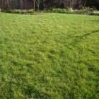 Grasverzorging in maart, wat moet ik doen?