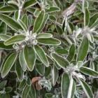 Groenblijvende planten: verschillende soorten