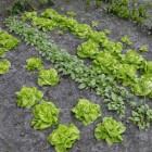Moestuin: bemesten van de tuin