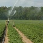 Sproeisysteem: kopen en aanleggen van een sproei-installatie