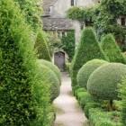 Het planten van bomen, hagen en struiken