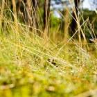 Gras: aanleggen van een kunstgrasveld