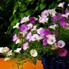 Experimenteren met plant en pot combinaties