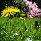 De tuin: Veel groen en weinig onderhoud