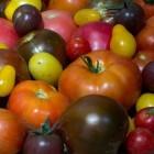 Tomaten uit eigen tuin smaken het lekkerst