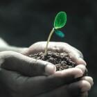 Compost maken van eigen GFT-afval en de tuingrond verbeteren