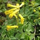 Geel bloeiende planten in de tuin