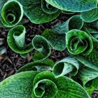 De groene tuin; tuinieren met uitsluitend bladplanten