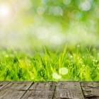 Het klimaat in de tuin aanpassen