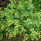 Tuinplanten voor kleigrond, geschikt voor kleine tuinen