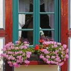 Welke planten zijn het meest geschikt voor op een balkon?