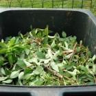 Maak zelf compost. Goed voor milieu en je portemonnee