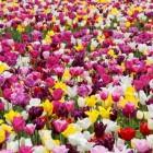 De kracht van kleur en bloemen in huis