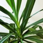 Ik wil een plant thuis met weinig of geen onderhoud