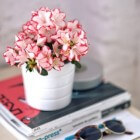 Met mooie kamerplanten het nieuwe jaar in