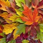 Eigen decoratie maken: herfst