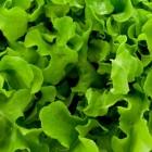 Groenten die makkelijk teruggroeien op je vensterbank